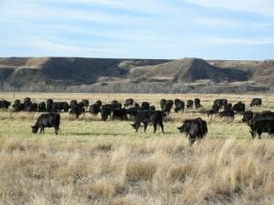 PA-herd